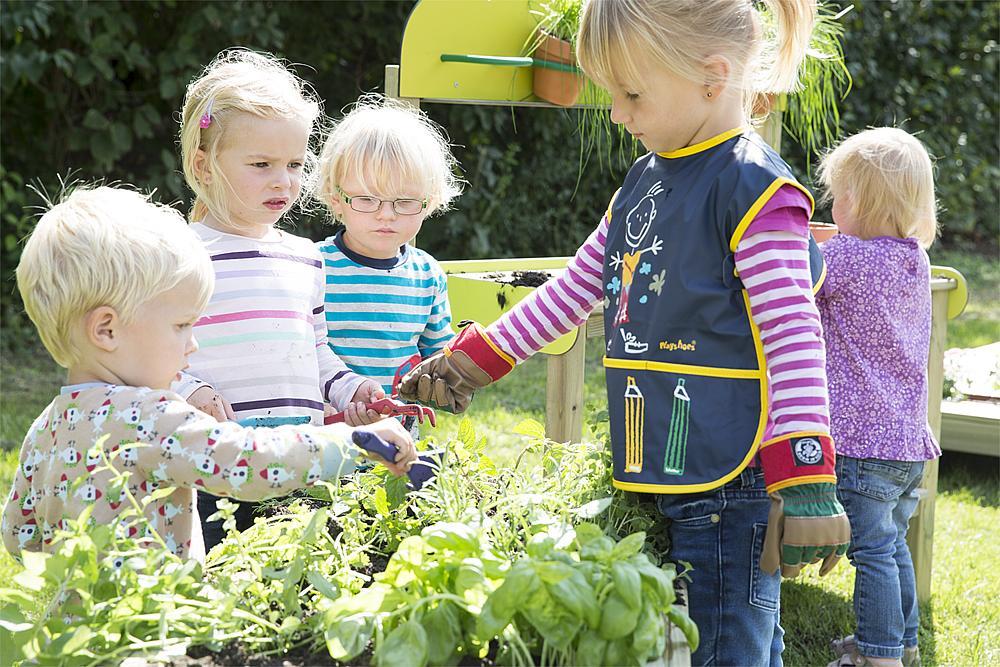 planting vat Salvia